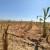 Alltech ONE Ideas: Poljoprivreda je ključni dio rješenja globalnih problema