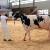 Na stočarskoj izložbi sve veći broj mladih uzgajivača!