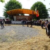 Šampioni izložbe pastuh Vihor i krava Maja