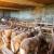 Ranko Radovanović vlasnik je najveće farme ovaca u Toplici