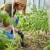Studenti: Kako steći potrebno iskustvo za rad u poljoprivredi?