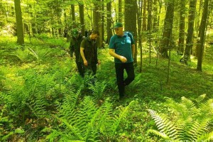 Jedina BiH prašuma obiluje biodiverzitetom, ipak pri dnu smo evropskih zaštićenih područja