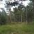 Besplatan sadni materijal u cilju podrške pošumljavanju privatnih šuma