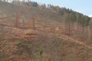 Sječom šuma trebali bi se baviti samo nadležni, ukoliko želimo da ih sačuvamo u budućnosti!