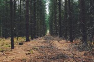 Virtuelni muzej šumarstva ostvario veliki interes posjetilaca širom svijeta