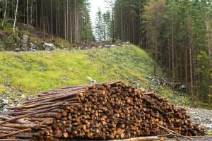 Davor Vlaović: Zabrana pašarenja, brsta i žirenja u našim šumama nije dobra