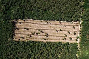Krče šume zbog palminog ulja - nestalo 39% zelenog bogatstva na Borneu