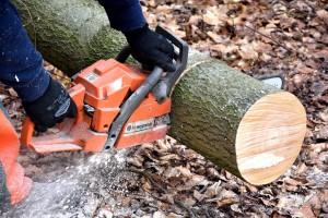 Šume Srpske planiraju prihod do 30 miliona KM, radnike neće otpuštati