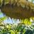 U RH proizvedeno gotovo 33 tone sjemenskog suncokreta, Patricia CL nosi više od pola proizvodnje