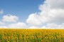 Priručnik za poljoprivredna gospodarstva