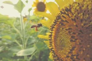 Čovjek ovisi o pčelama i drugim oprašivačima - neka svaki dan bude njihov