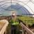 Za poljoprivrednike USK obezbjeđeni plastenici uz minimalno učešće