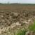 Poljoprivredno tlo: Ako ga vlasnik ne koristi, država ga privremno daje drugom