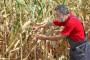 Suša uzrok višemilionskih šteta u poljoprivredi