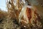 Istarskim poljoprivrednicima 1,2 milijuna kuna za štete od suše