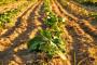 Radionica o rizicima suše u Dunavskoj regiji