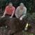 Čipiran najstariji medvjed na Tari: Miša ima više od 15 godina