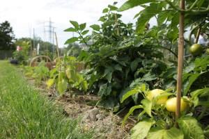Instinkt poljoprivredniku više nije dovoljan - sve više će se oslanjati na tehnologiju