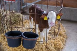 Osigurajte svoje životinje po novom EU modelu s gubitkom proizvodnje od 20%!