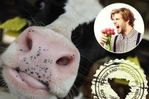 Sve što niste znali o bh poljoprivredi - samo u jednoj stvari smo prvi u svijetu !?
