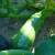 Kako uzgojiti zelene tikvice bolognese