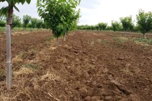Na kakvim tlima je najbolje uzgajati trešnju?
