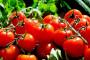 Jednim klikom do informacija o toksičnosti hrane