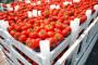 Otkad je u EU, Poljska izvozi duplo više rajčice