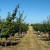 Belorusija zainteresovana za voće iz Srbije