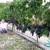 Čudo u Žeževici: Petnaest metara duga loza Malog plavca dala urod od 120 kilograma grožđa