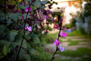 Vertikalan uzgoj povrća i jestivog cveća - dekorativno i praktično