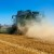 Crnomorsko tržište i dalje najvažnije u trgovini pšenicom