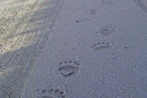Medvedi šetaju Tarom