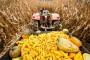 Tlo se otvorilo pod traktorom dok je brao kukuruz