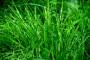 Septembar - idealan za jesenju setvu trava