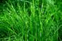 Septembar - idealan mjesec za jesenju sjetvu trave