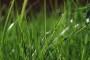 Krajnji rokovi za sjetvu djetelinsko travnih smjesa