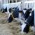 Poticaj za 3. kvartal i kontrole - teme sastanka Udruženja poljoprivrednika FBiH