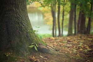 Zakon o šumama i drvenastim kulturama kratkih ophodnji - dajte mišljenje na obrasce