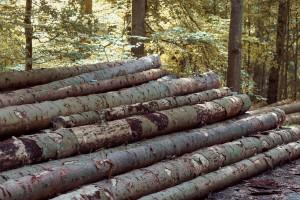 Izvoz trupaca i ogrjevnog drveta se ne zaustavlja, a drvoprerađivačima fali sirovine