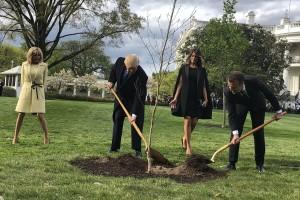 Sjećate se hrasta kitnjaka kojega su zajedno posadili Trump i Macron? Osušio se