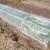 Protiv mraza u vrtu vodom, malčem, plastičnim tunelom ili agrotekstilom