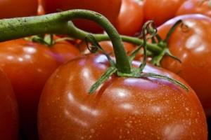 Propao im izvoz paradajza u Rusiju pa ga preusmjerili u BiH, Bjelorusiju i Ukrajinu