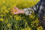 Fungicid zlatnih prednosti u uljanoj repici