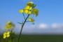 Poljoprivrednici žele u Gospodarsko-socijalno vijeće