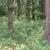Zašto ulagati u sadnju drveća i kako održavati šumu?