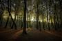 Sivo tržište ogrjevnog drveta bliži se kraju