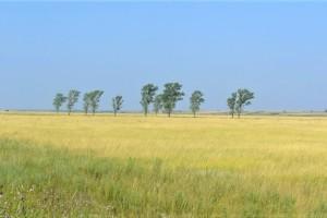 Za (ne)pošumljavanje Vojvodine krive lokalne samouprave?