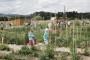 Samo tri slavonska grada imaju urbane vrtove
