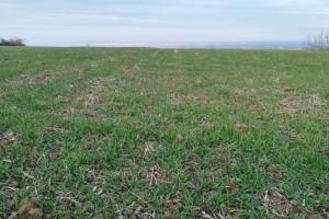 Stanje ozimih usjeva dobro - sada je vrijeme za prihranu azotom